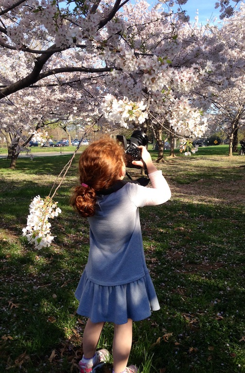 Cherry Blossoms picture taking